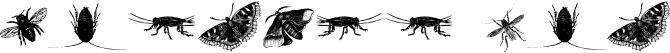 insects one
